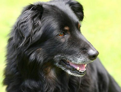 Senior Dog Special