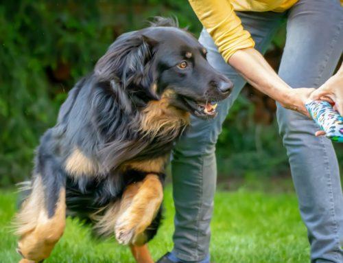 19 mei – Workshop spelen met je hond, maar hoe dan ?