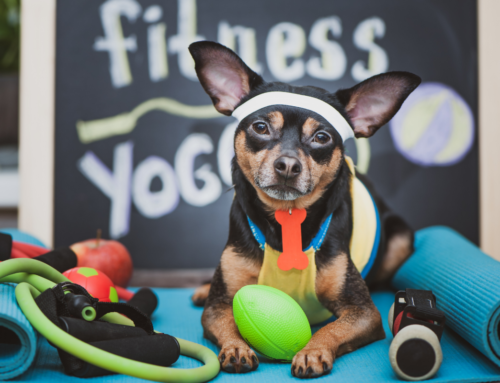 Dogs Fun & Balans